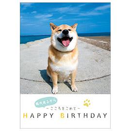 メッセージブック 柴犬まるからこころをこめて HAPPY BIRTHDAY (柴犬まる)