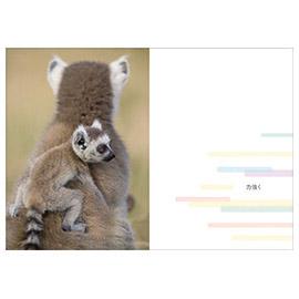 メッセージブック Hello New Baby ~こんにちは赤ちゃん~(動物親子)