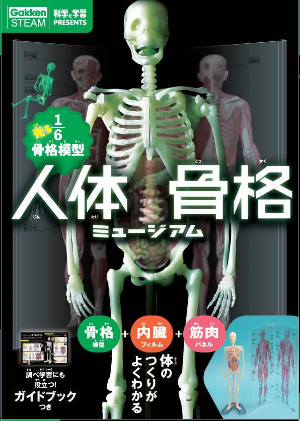 科学と学習PRESENTS 光る1/6骨格模型 人体骨格ミュージアム